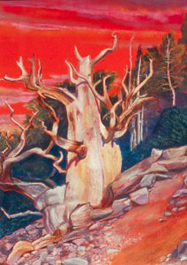 Bristlecone Pine Colorado (landscapes, Pastel) - Fine Art by Donald G. Vogl, Fort Collins, Colorado