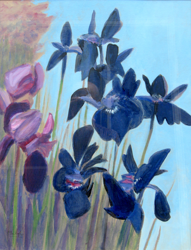 Blue Iris  (still-lifes, Watercolor) - Fine Art by Donald G. Vogl, Fort Collins, Colorado
